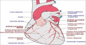 Endocardite pode estar relacionada à saúde bucal
