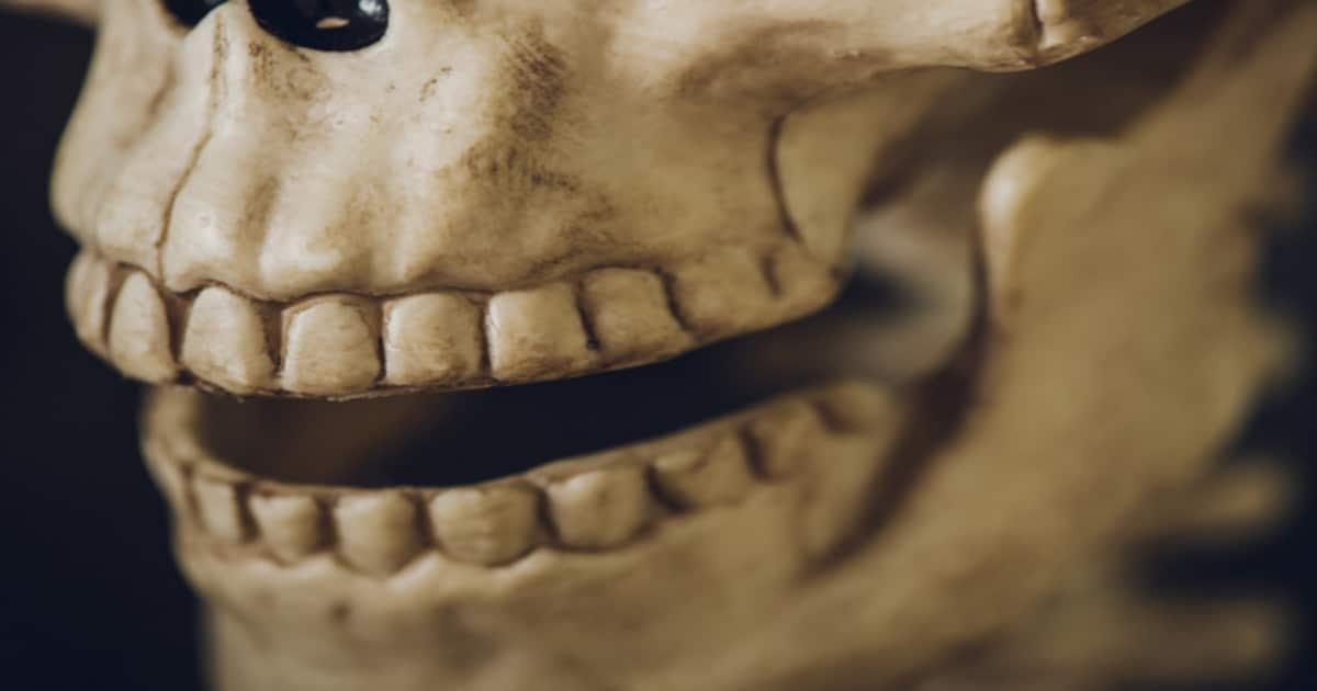 Crânio mostrando os dentes da boca - Descubra tudo o que você precisa saber sobre o maxilar
